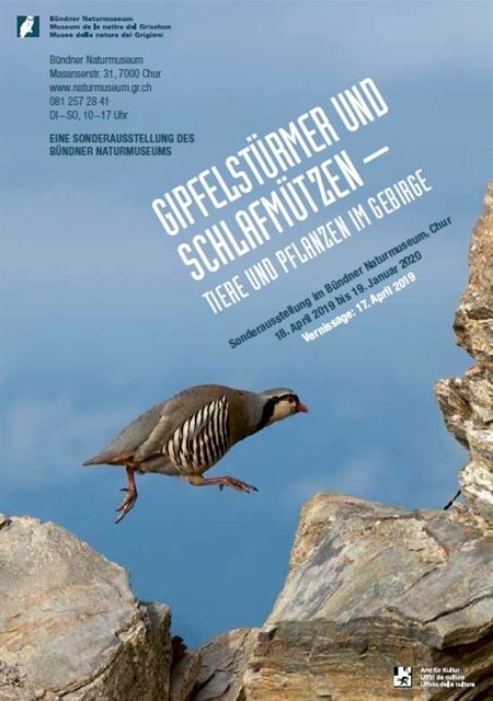Ausstellung Gipfelstürmer__w_450__h_0